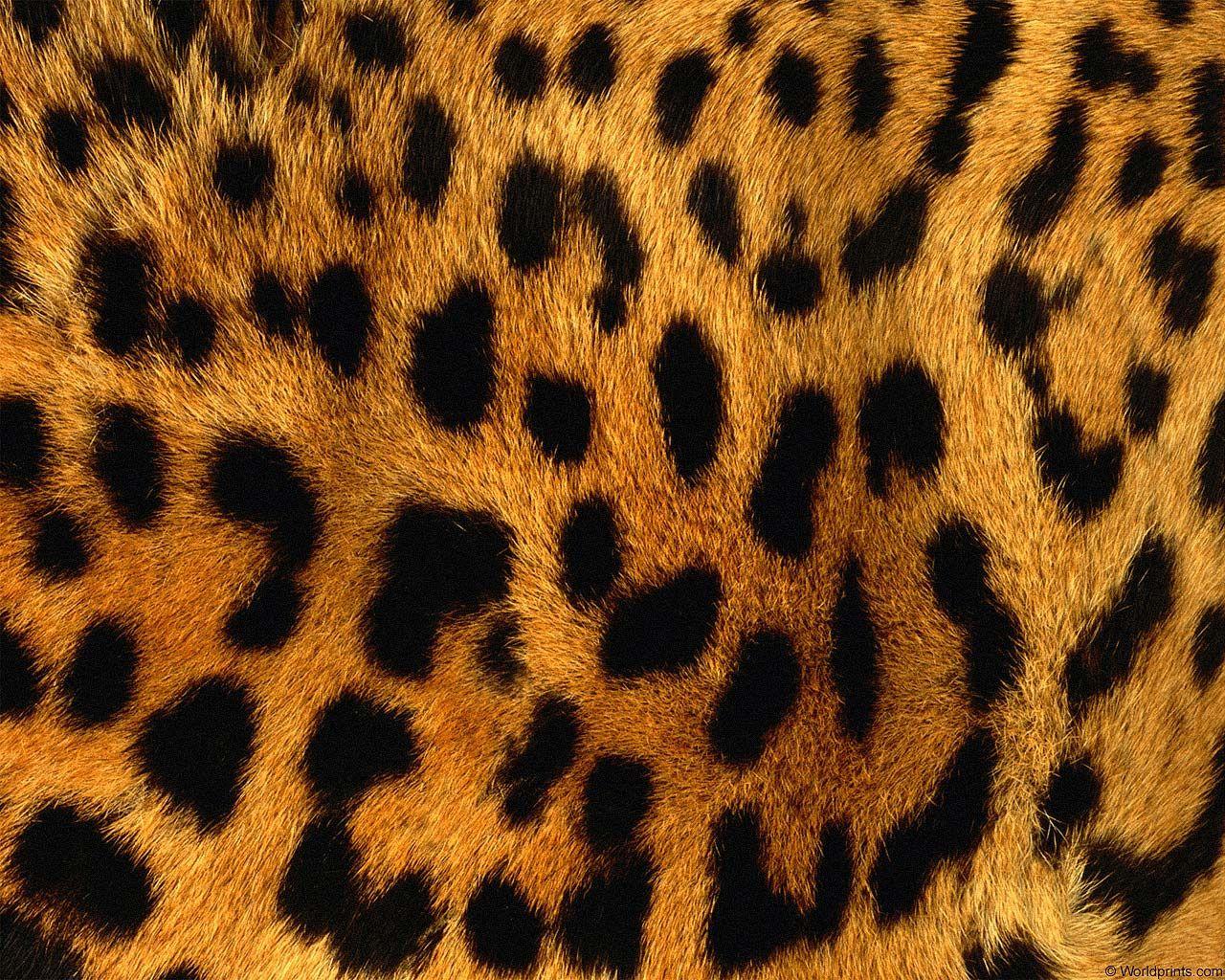 Леопард рыжий